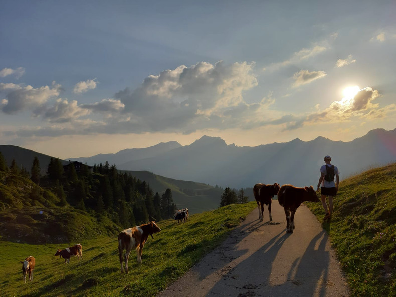 Me on a mountain with cows